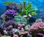 time-lapse коралловых рифов